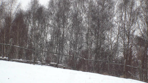 Wind blow snow deposited near the forest of birch separated by a fence of pastur Footage
