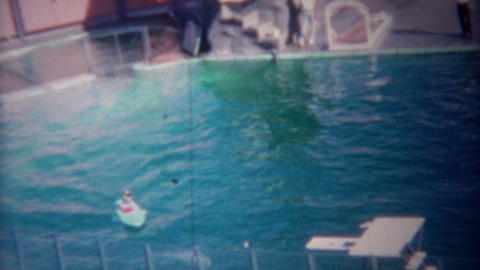 1955: Trained dolphin towing dog on surfboard around show pool Footage