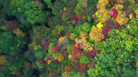 Aerial video of the mountain that is colored by autumn leaves. track-right 영상물