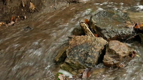 Stream with stones and rocks in forest Footage
