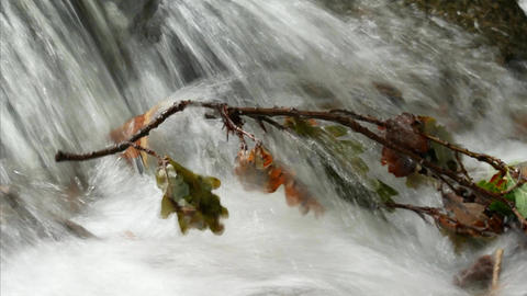 Stream in forest with oak tree branch in water Footage
