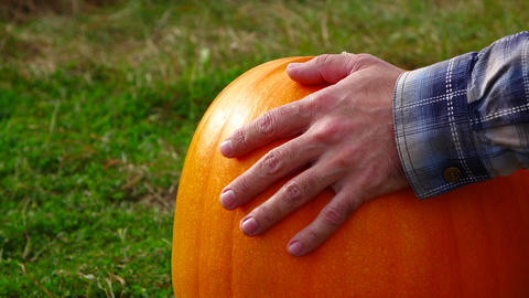 Man put palm over ripe pumpkin, tap by fingers, slow motion shot Live Action