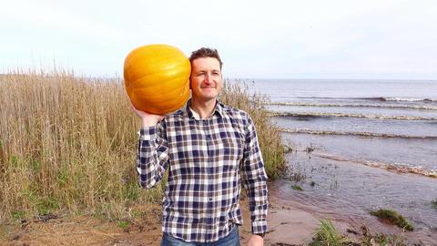 Man pose with large orange pumpkin, playful listen what inside plant GIF