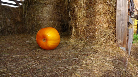 Medium sized mellow orange pumpkin slowly roll at hayloft floor, tracking shot Footage
