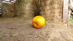 Bright yellow large pumpkin bowl by grassy floor at haymow, stop at exit GIF