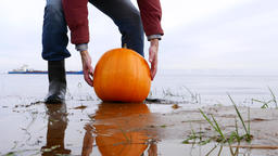 Man pick up bright orange pumpkin from wet sand, take away from beach Live Action