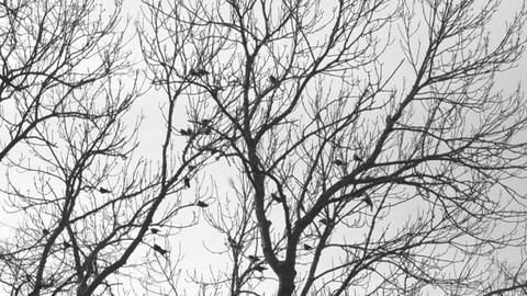 Birds sitting in trees Footage