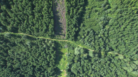 View of paths through dense forest Footage