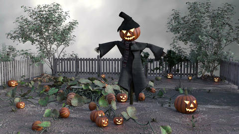 a vegetable garden with pumpkins and a garden stuffed with a jack pumpkin Animation