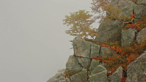 Autumn Landscape. Foggy weather in the mountains Footage