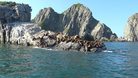 Sea lions. Sea Safari journey along the Kamchatka Peninsula. Russia Footage