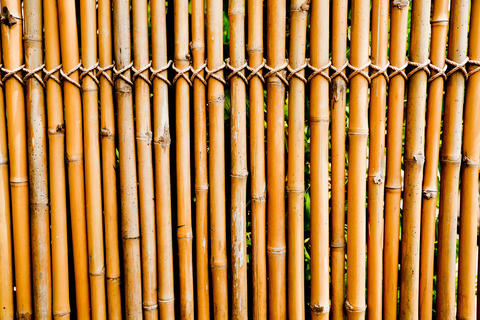 Old bamboo texture フォト