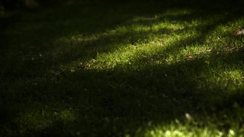 Shadows pass over green grass closeup Footage