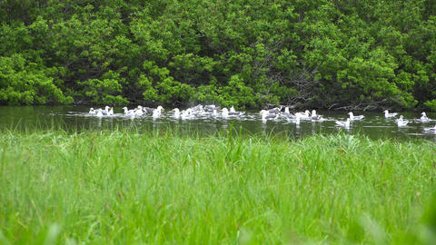 Seagulls. Sea Safari journey along the Kamchatka Peninsula. Russia Footage