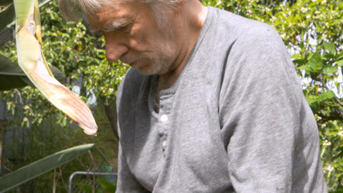 Healthy senior man removing an old nail from a piece of wood while repairing a Footage