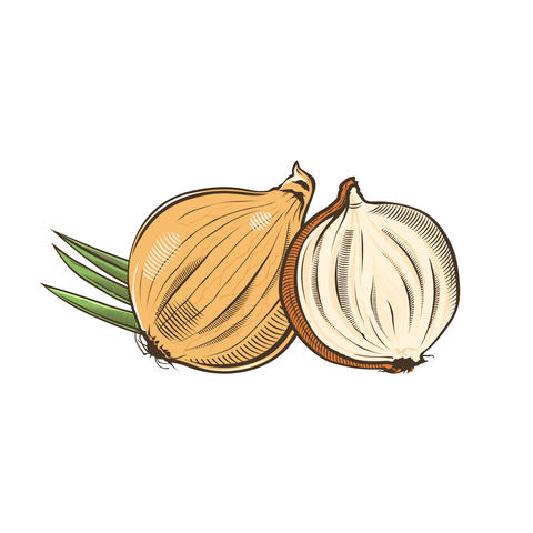 Onion in vintage style Foto