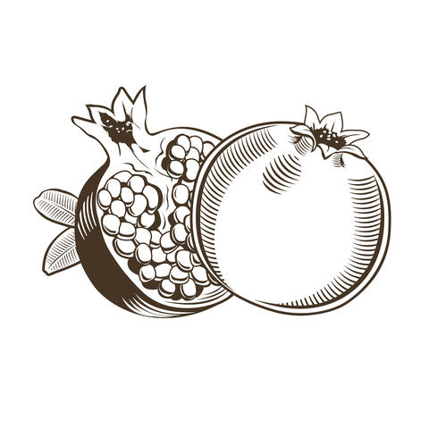 Pomegranates in vintage style フォト