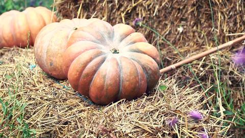 Halloween Pumpkins Footage