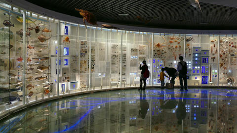 People Visitors Visiting Natural History Science Museum Exhibition Tokyo Japan Footage