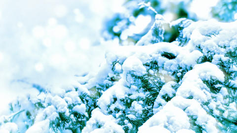 Snow-covered branch zoom out motion background Footage
