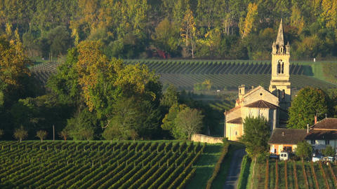 Vineyard landscape-Vineyard south west of France-Sauternes-Loupiac-Time lapse Footage