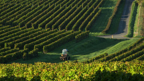 Tractor crossing the vineyards, Harvesting red grapes in vineyards of Saint Footage