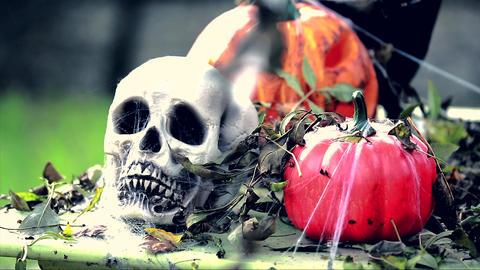 Skeleton Head with Halloween Pumpkins 画像
