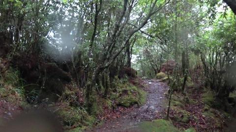 SONY FDR-X3000 Taiwan Nantou Yushan National Park Dongpu Mountain 20171015 25 画像