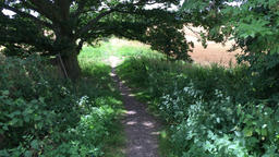 Country path in English countryside Essex UK Footage