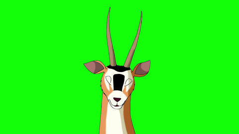 Antelope Gazelle Closeup Chroma Animation
