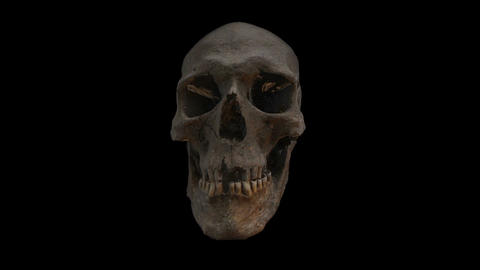ancient human skull and vein Animation