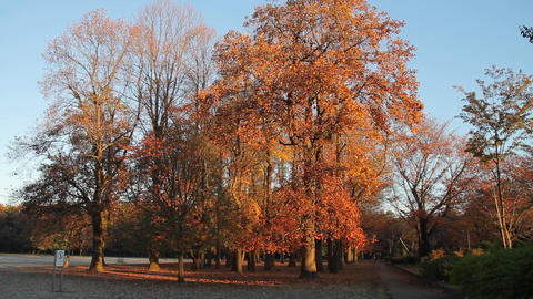 Autumn Leaves / Fall Colors / Trees / Morning - Fix Filmmaterial