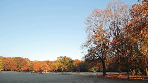 Autumn Leaves / Fall Colors / Trees / Morning - Pan/Fix ビデオ