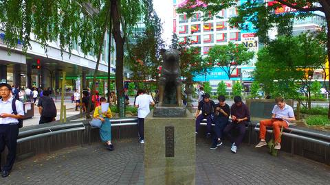 Tracking shot of around dog Hachiko in Shibuya Tokyo Japan ライブ動画