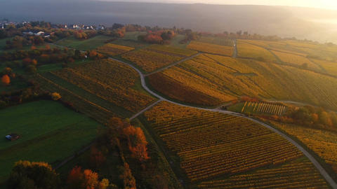 Aerial view over autumnal vineyards Filmmaterial