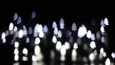 White pine bokeh front Footage