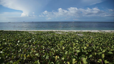 Tropical beach covered with green vegetation Footage