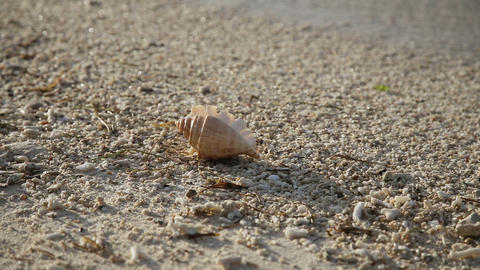 Seashell on the sand beach Footage