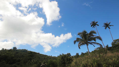 Landscape with coconut trees and mountains Footage