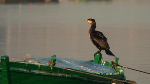 garza y cormoran Footage