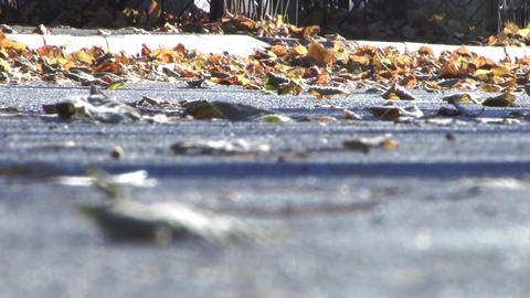 leaves blown by the wind on a sunny paved street 13 Footage