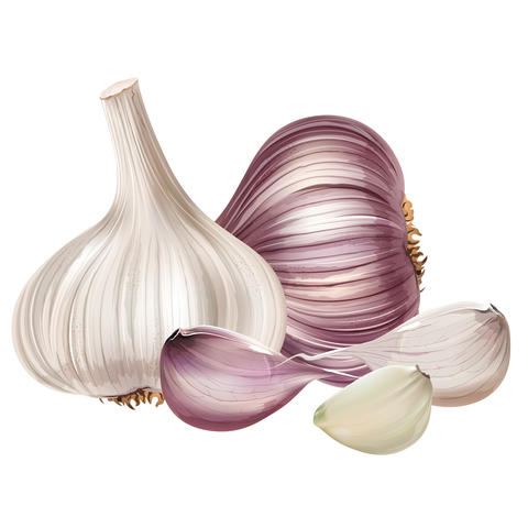 Garlic on white background フォト