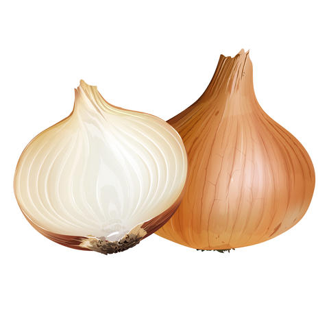 Onion on white background フォト