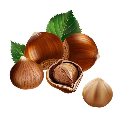 Hazelnuts on white background Fotografía