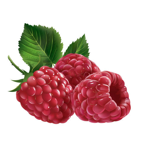 Raspberries on white background フォト