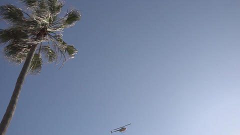 Helicopter and Bird in Sky Near Palm Trees Footage