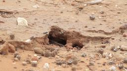 Ants In The Judean Desert stock footage