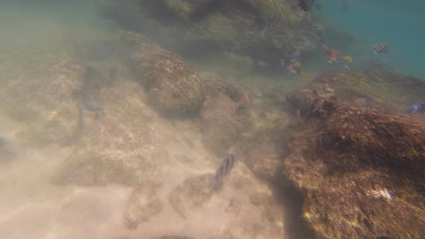 Underwater in the Gulf of Mexico: Version #7