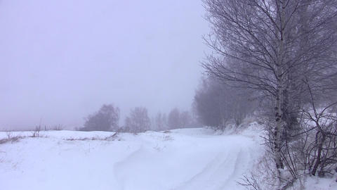 Birch in the wind at a roadside deserted, covered in snow of winter cold 43 Footage