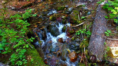 Glacier National Park Stream Footage